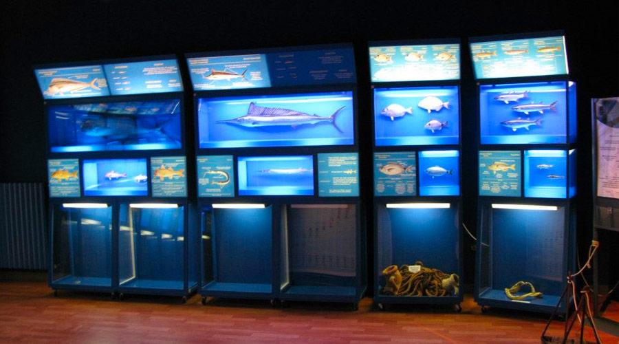 Sala del museo di biologia marina di porto cesareo